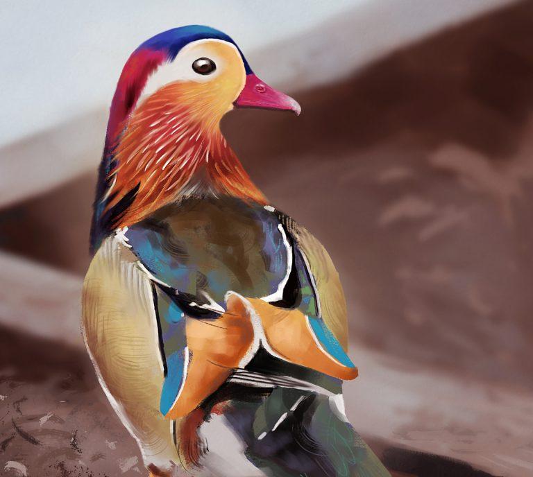 Digital painting of Mandarin Duck by Graham Pilling