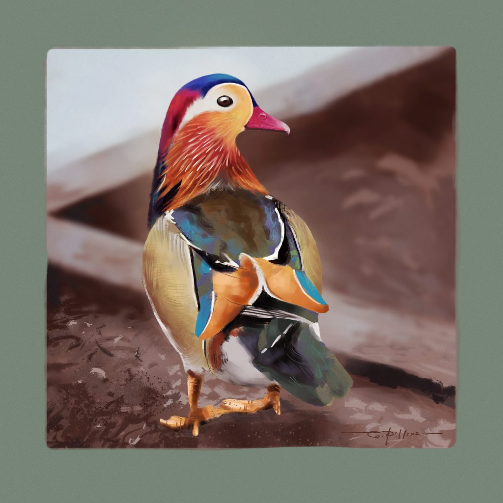 Digital painting of Mandarin Duck by Graham Pilling